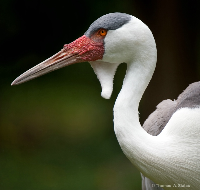 tom statas crane zoos