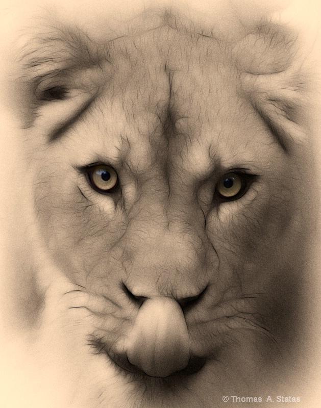 tom statas lioness creative di