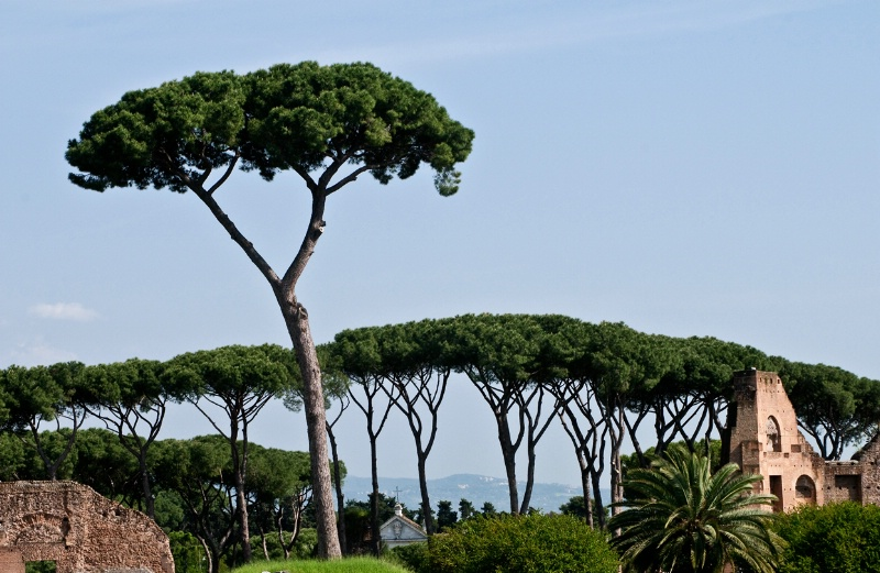 Roman Tree