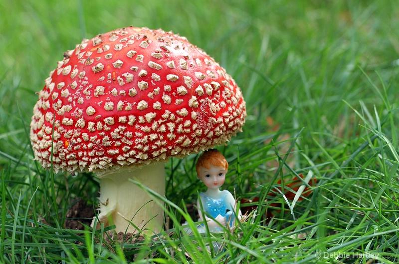 Fairytale Mushroom