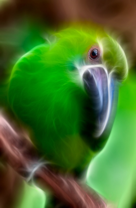 Psycho Parrot