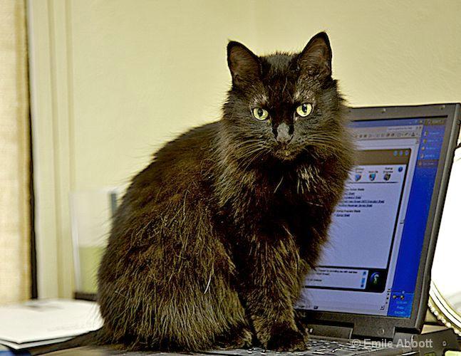 Tamieka office cat