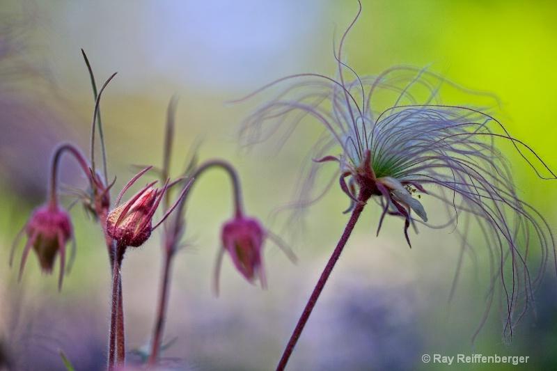 img 1901 flower 10