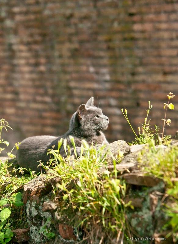 Torre Argentina Roman Cat Sanctuary Resident
