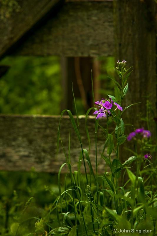 Spring - Near the Gate