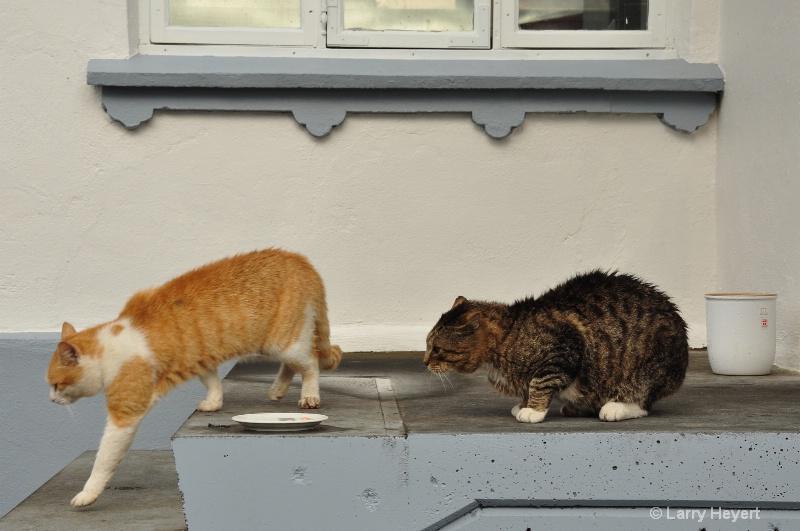 Iceland- cats at Egilsstadir Hotel