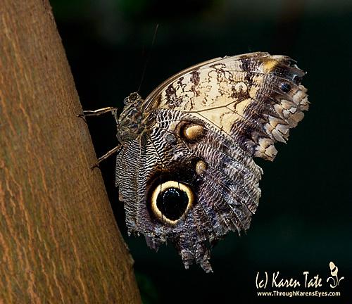 Rough World Even for Butterflies
