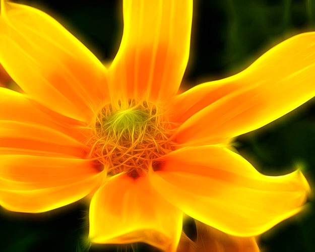 yellow 15