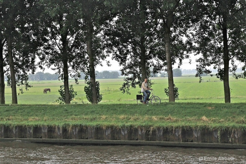 Bike rider and horses along the Kanaal route