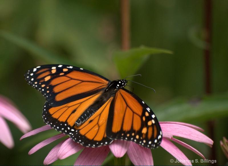 Museum Monarch