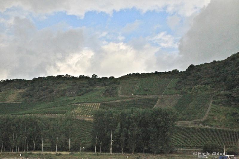 vineyards along Rhine