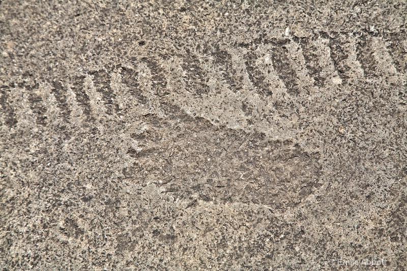 Bear paw and tracks