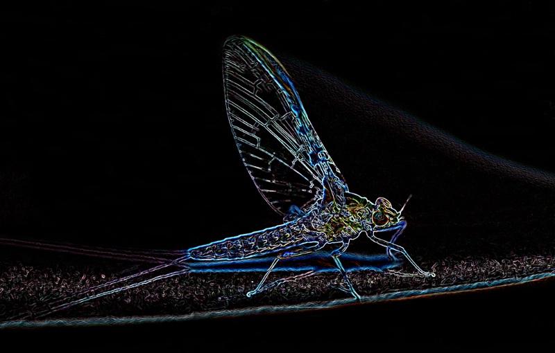 Neon Mayfly