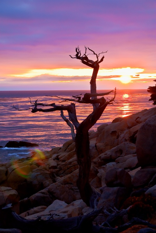 Ghost Tree Point at 17 Mile Drive