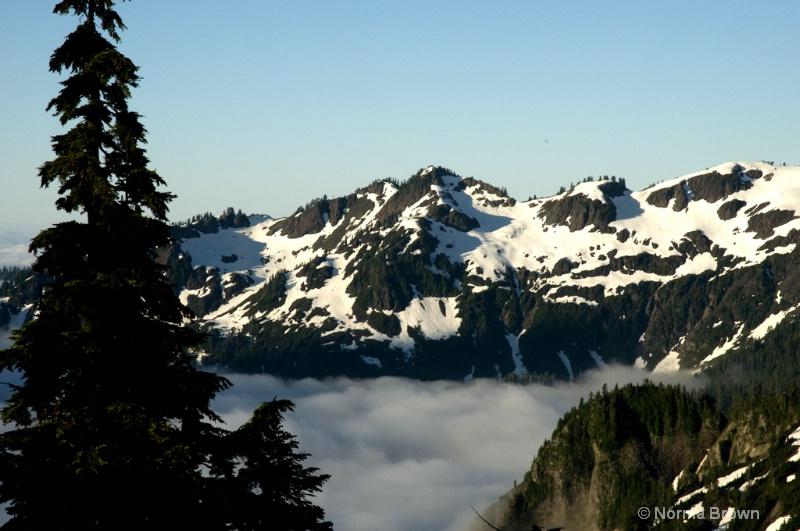Morning Fog in Mt. Baker NF. WA