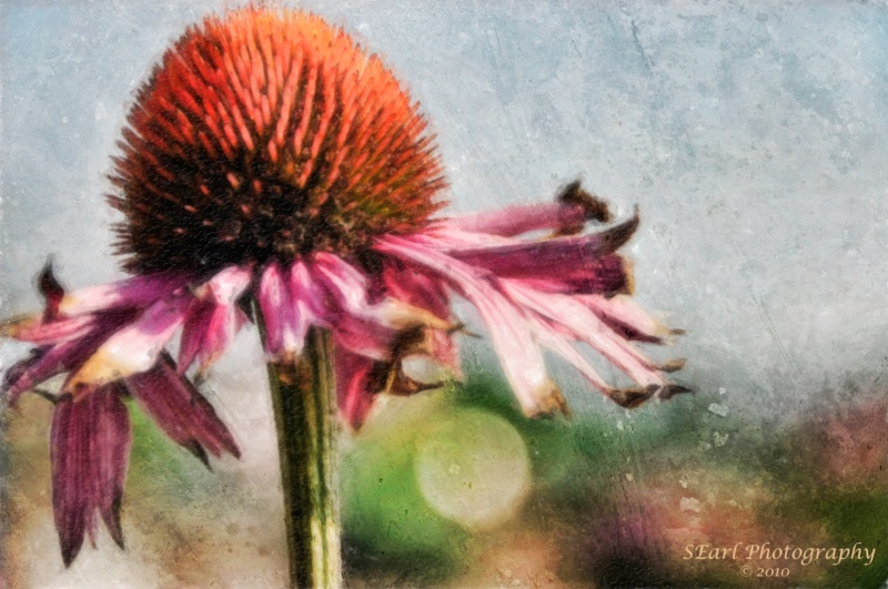 Photo of the Week@@Watercolor Technique