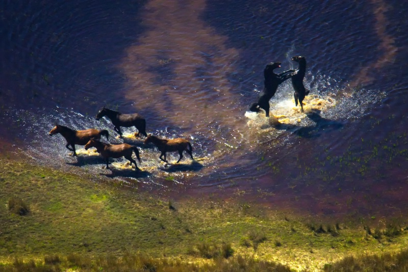Wild Horses of South Africa