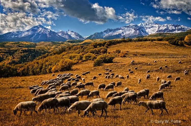 Pastoral Paradise