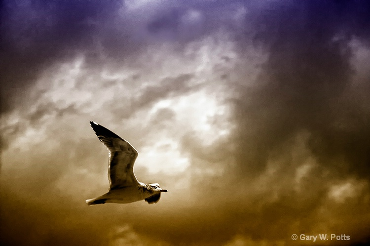 Soaring With The Spirits