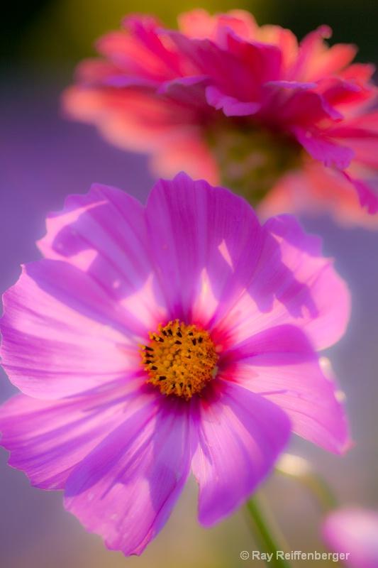 img 8622 flower10