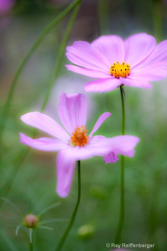img 9017 flower10