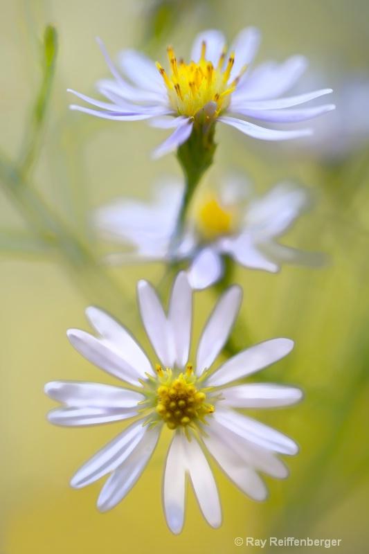 img 9914 flower10