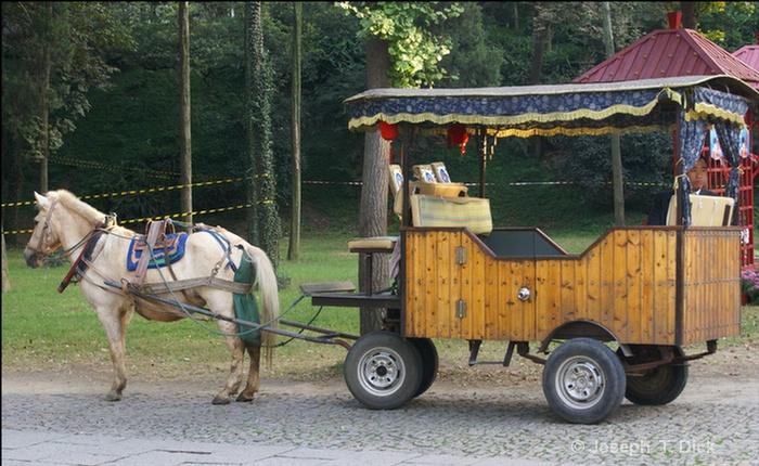 tiger hill horse cart