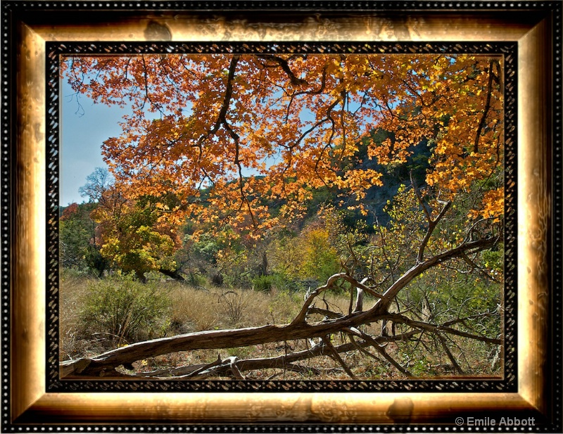 Autumn at Lost Maples State Natural Area