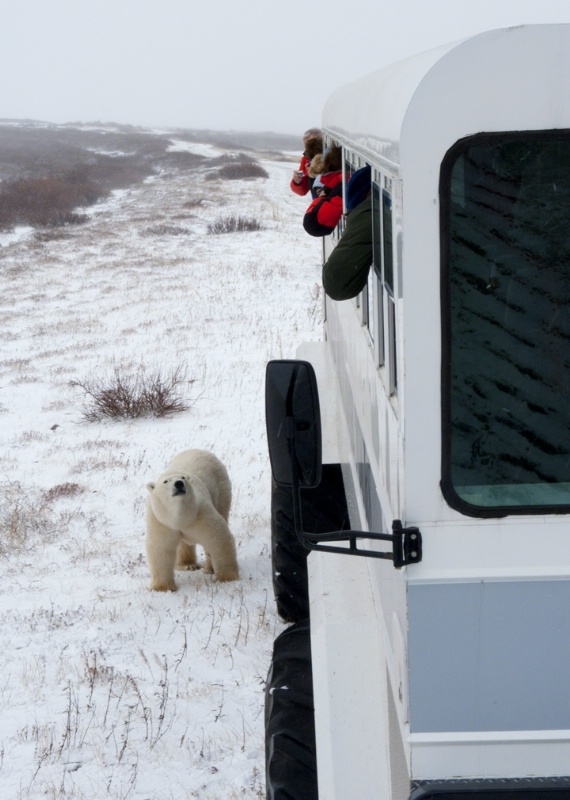Polar Bear with Polar Rover