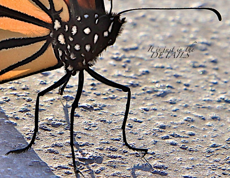 """Monarch Migration """"Attention to Details"""""""