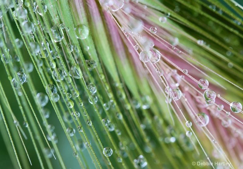 Nature's Drops