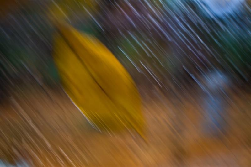 Rain, Leaves and Wind