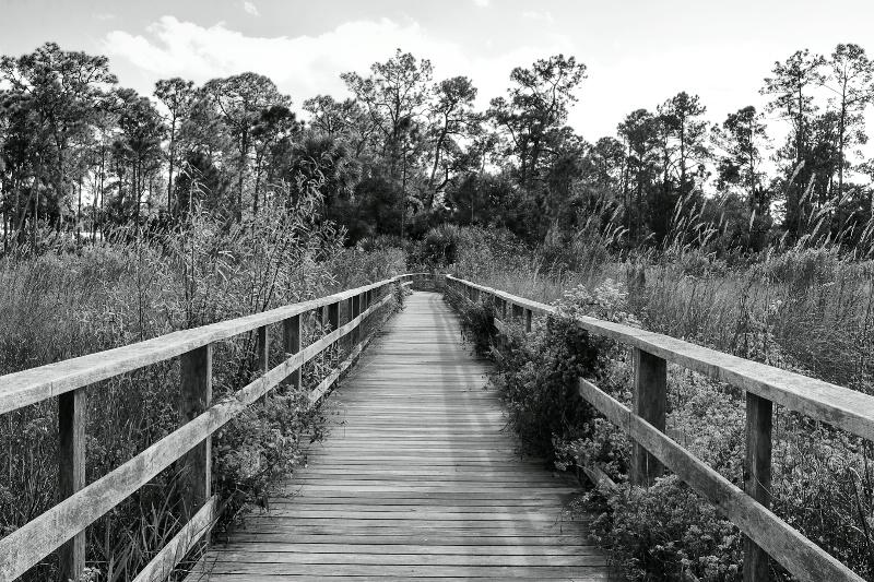 Boardwalk at Corkscrew Swamp
