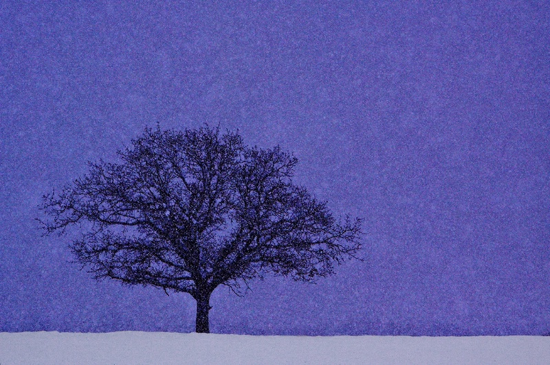 Let it Snow - Let it Snow.... Let it Snow!