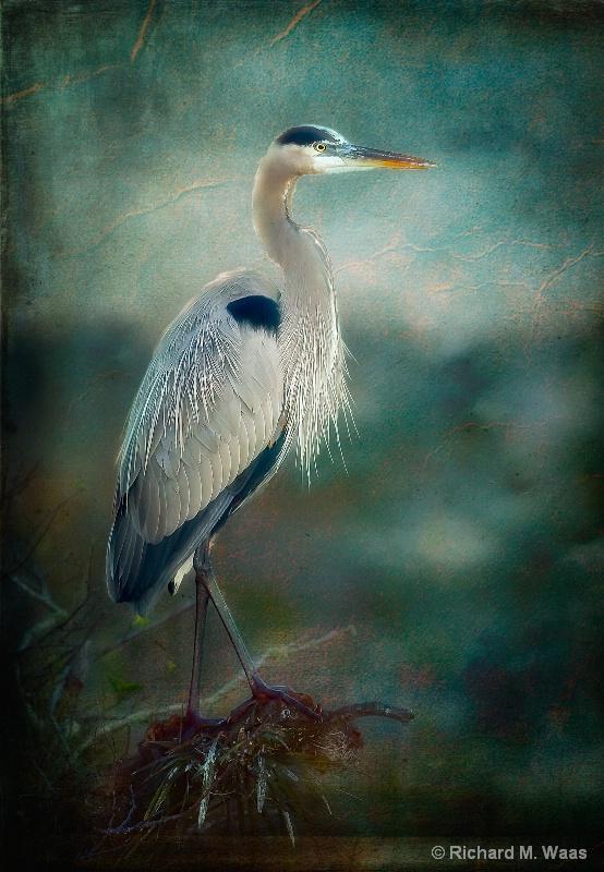 Blue Heron at Sunrise