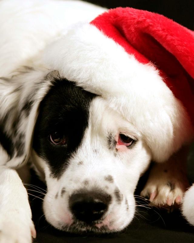 Santa Boo