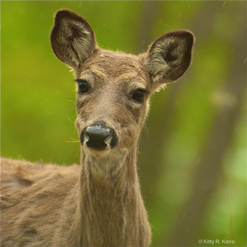 Portrait of a Deer in the Rain