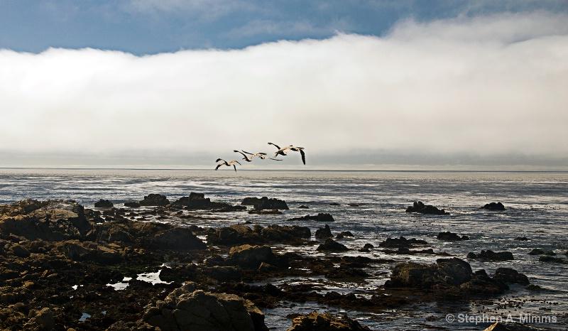 Flight into fog