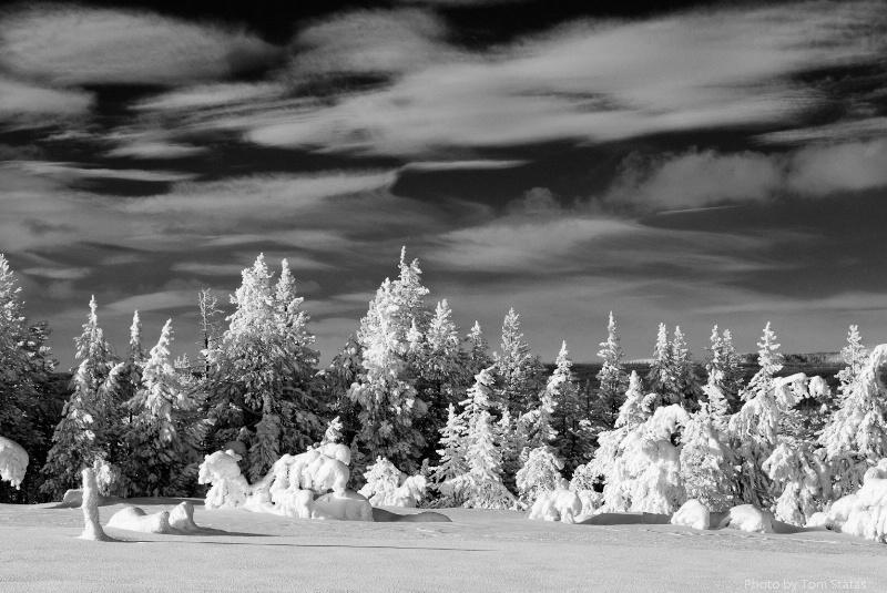 Winter Scene - Infrared