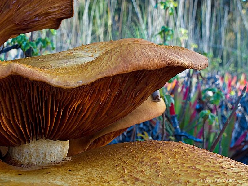 mushroom20