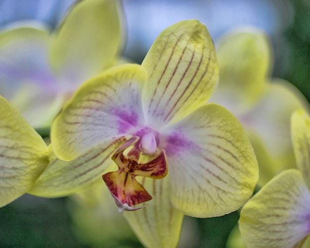 orchids 17