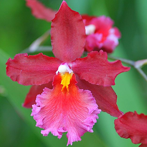 orchids 16