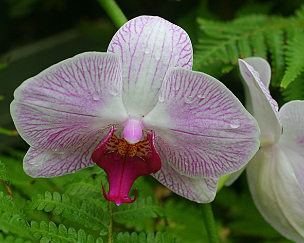orchids 13