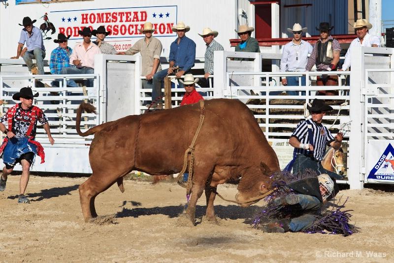 I Think the Bull Won