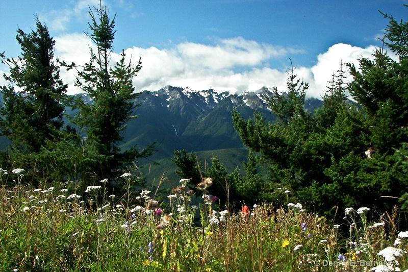 MT Olympus and Wild Flowers, WA