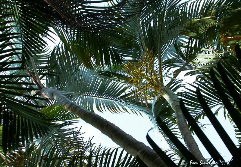 Palm's Patterns
