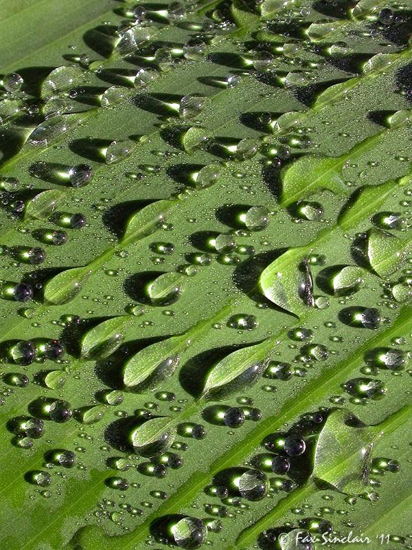Variety of Raindrops
