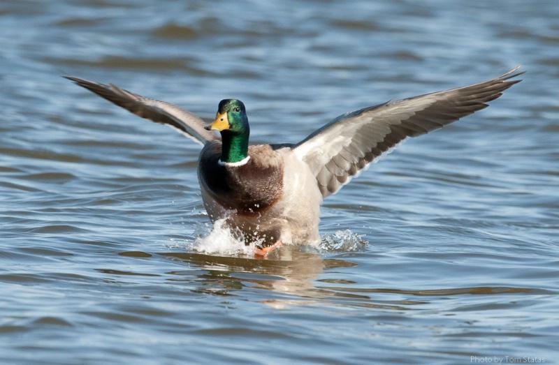 Blackwater 2011-02-12-16
