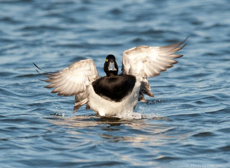 Blackwater 2011-02-12-38
