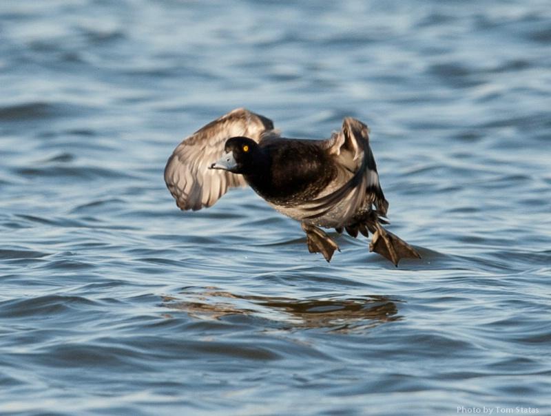 Blackwater 2011-02-12-40